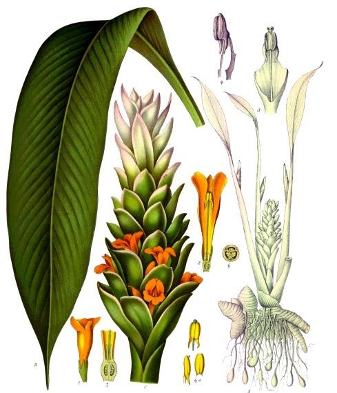 farsalia-curcuma-2