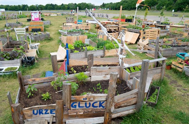 Urban public community  garden or Allmende Kontor at  historic  Tempelhof Airport now park in Berlin Germany